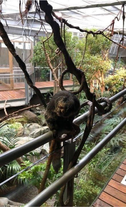 mono del biodomo de granada